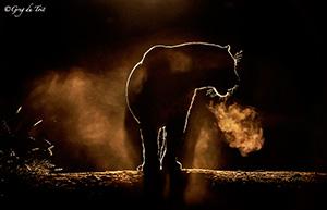 Foto van een luipaard door Greg Dutoit.