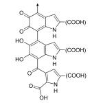 Dit is de chemische structuur van het biomolecule eumelanine, het donkere oogpigment. (Bron van de afbeelding: http://commons.wikimedia.org/wiki/File:Eumelanine.svg)