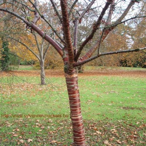 Op de foto stond een detail van deze boomstam.