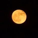 Onze maan vanavond.