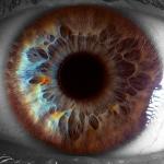 Bij mensen met een bleke oogkleur, kun je prachtig de structuur van de iris zien, zoals hier gefotografeerd door Suren Manvelyan.