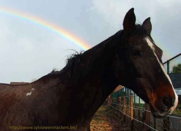 Regenboog.