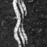 Fragment van een fonautogram uit 1859. De oudst bewaard gebleven stem stamtuit 1860, 17 jaar vóór Edisons uitvinding.
