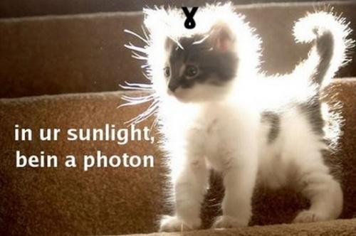 Katten en fotonen.